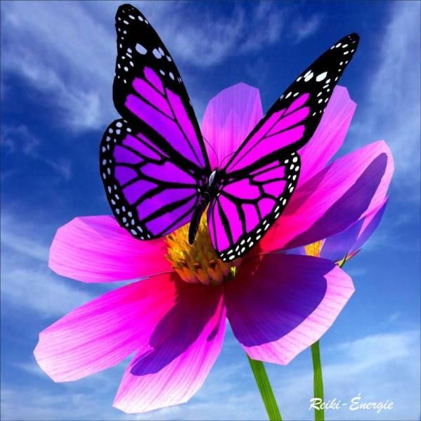 papillon-rosee-52413191782-6951222931596765875-n